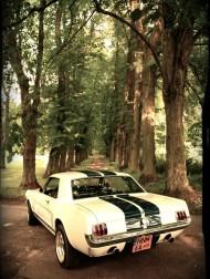 Ford Mustang 1965 - piekneklasyki.pl